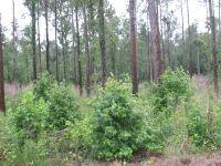 Home for sale: +/- 20 Acres Union County Ar, El Dorado, AR 71730
