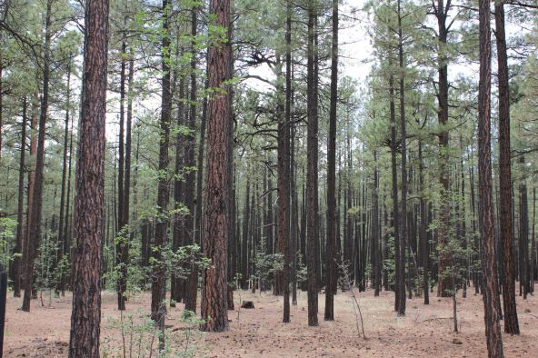 4045 Buck Springs Rd., Pinetop, AZ 85935 Photo 5