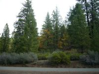 Home for sale: Apx.3.5 Miles Up Indian Ck.Rd., Fort Jones, CA 96032