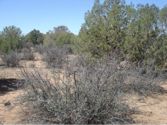 14480 N. Soza Mesa Ln., Prescott, AZ 86305 Photo 3