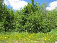 Home for sale: 14 Jonvick Ridge, Lutsen, MN 55612