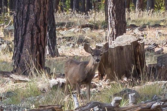 8100 W. Dk Ranch Rd., Flagstaff, AZ 86005 Photo 2
