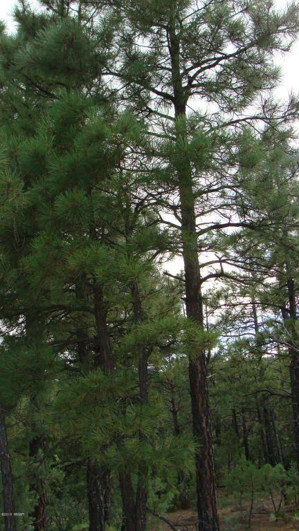 2380 S. Twin Peak Trail, Show Low, AZ 85901 Photo 7