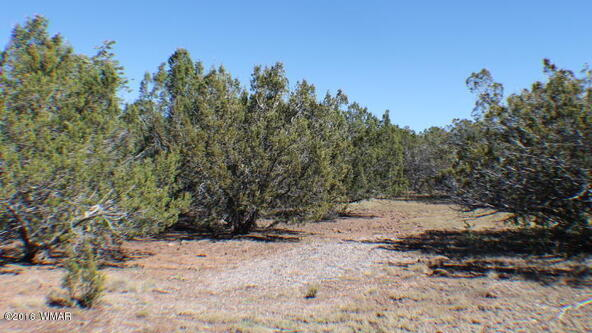 8 Acres Off Of Acr N. 3114, Vernon, AZ 85940 Photo 6