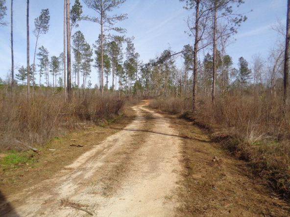 275+/-Ac Cty Rd. 46/Cty Rd 97, Abbeville, AL 36310 Photo 27