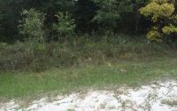 Home for sale: S.W. Sedgefield Farms Gln, Fort White, FL 32038