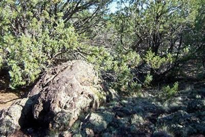1419 W. Maverick Ln., Williams, AZ 86046 Photo 6