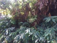 Home for sale: Ainahau Rd., Volcano, HI 96785