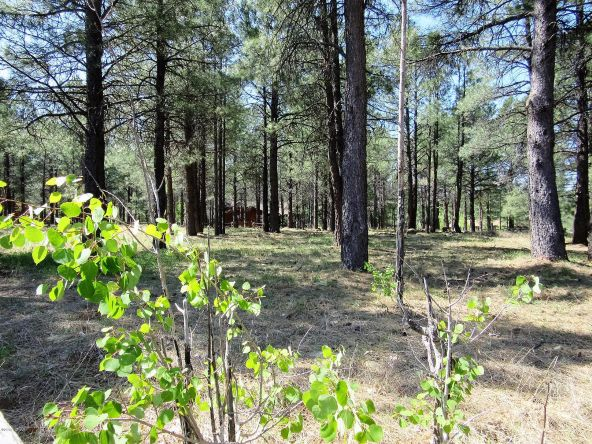 4621 Buck Springs Rd., Pinetop, AZ 85935 Photo 3