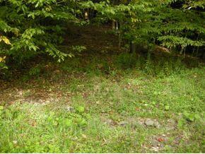 1170 Tracy Creek Rd., Vestal, NY 13850 Photo 4