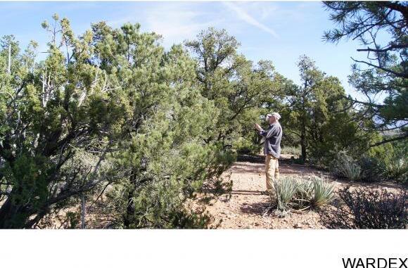 9999 N. Trap Springs Rd., Hackberry, AZ 86411 Photo 13