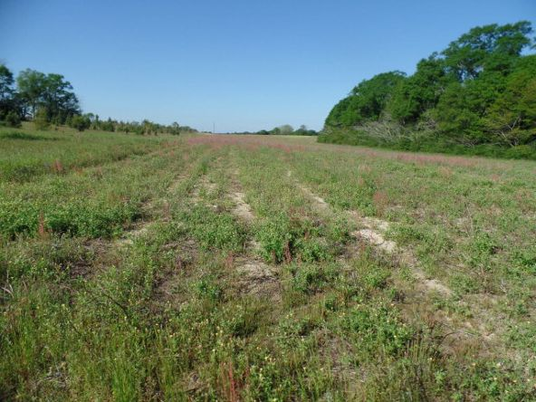 8.2 Ac Cottonwood Rd., Dothan, AL 36301 Photo 2