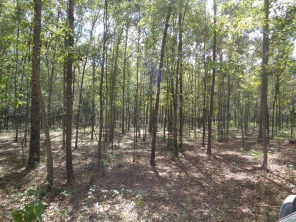 31.2 Ac Johnny Murphy Rd., Dothan, AL 36301 Photo 20