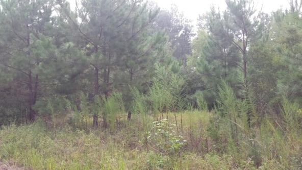 0 Lee Rd. 586, Smiths Station, AL 36877 Photo 2