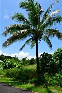 Home for sale: Poonui St., Pahoa, HI 96778