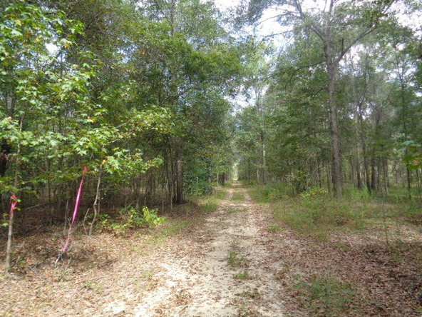 31.2 Ac Johnny Murphy Rd., Dothan, AL 36301 Photo 33