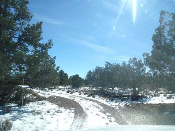 459 Hardrock Rd., Seligman, AZ 86337 Photo 49