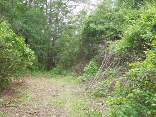 7.8acres Hardy Rd., Rehobeth, AL 36301 Photo 2