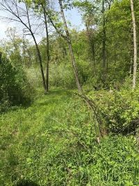 Home for sale: 56 +/- Acres County Rd. D, Melrose, WI 54615