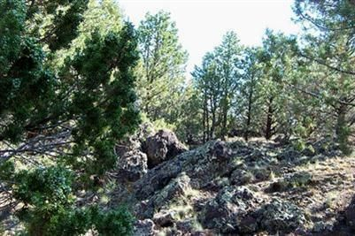 1419 W. Maverick Ln., Williams, AZ 86046 Photo 1
