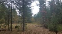 Home for sale: 3.3 Acres 9th Dr., Adams, WI 53910
