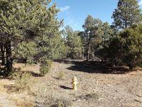 Home for sale: 2256 Double Bogey Way, Overgaard, AZ 85933