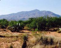 Home for sale: 24102 E. Navajo, Benson, AZ 85602