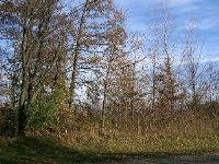 Home for sale: Lot 11 Ramm Woods Dr., Maple Park, IL 60151