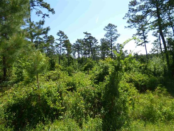 12 Ac Charlie Stover Rd., Royal, AR 71968 Photo 9