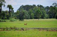 Home for sale: 6623 George Blvd., Sebring, FL 33872