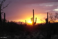 Home for sale: 2002 N. Semrai, Tucson, AZ 85743