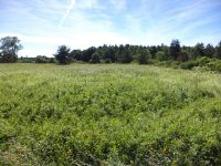 Home for sale: Lot 1 Wynn Rd., Hector, NY 14841