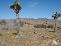 Home for sale: 53392 Wyandot Rd., Pioneertown, CA 92268