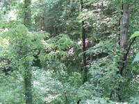 Home for sale: 00 Payne Ridge Rd., Church Hill, TN 37642