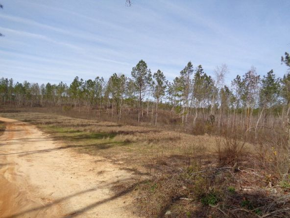 275+/-Ac Cty Rd. 46/Cty Rd 97, Abbeville, AL 36310 Photo 39