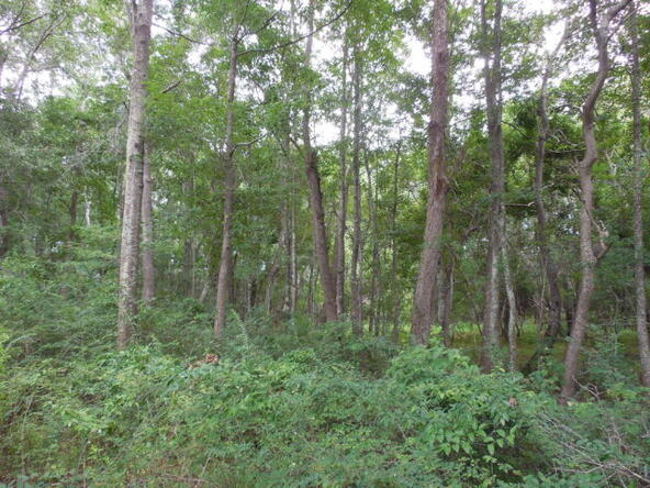 3 Acres Hwy. 103, Slocomb, AL 36375 Photo 7