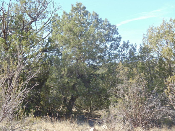 57174 N. Bridge Canyon Parkway, Seligman, AZ 86337 Photo 8