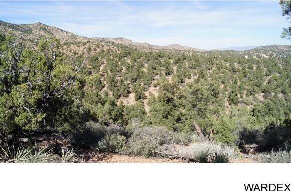 6731 N. Trap Springs Rd., Hackberry, AZ 86411 Photo 29