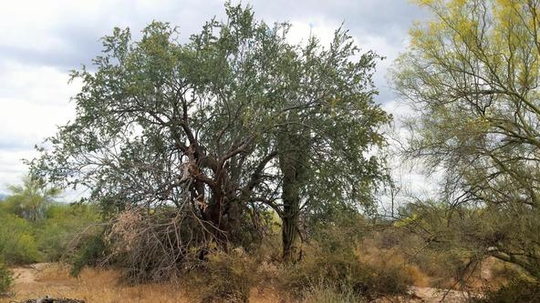 163 E. Dixileta Dr., Scottsdale, AZ 85262 Photo 7