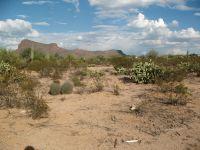 Home for sale: 7292 N. Ellexson, Tucson, AZ 85743
