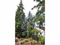 Home for sale: 251 Mt Echo Dr., Medford, OR 97504