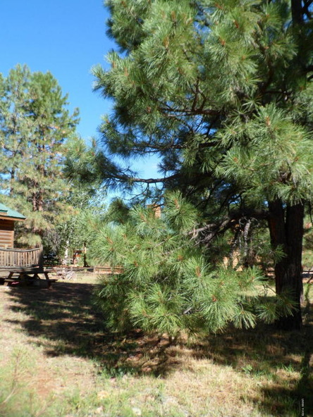2649 Lodge Loop, Overgaard, AZ 85933 Photo 48