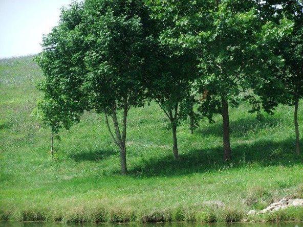 137 Tranquil Ln., Cynthiana, KY 41031 Photo 38