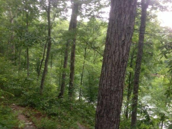 250 Co Rd. 318, Crane Hill, AL 35053 Photo 1