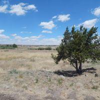 Home for sale: 1629 E. 2nd St., Springerville, AZ 85938