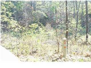 30 Augusta Rd., Guntersville, AL 35976 Photo 5
