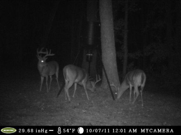 98 Acres Dry Creek Rd., Clayton, AL 36016 Photo 13