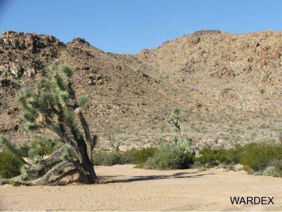 3529-D Arroyo Rd., Yucca, AZ 86438 Photo 3