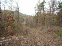 Home for sale: 108 Buckthorn, Mountain Pine, AR 71956