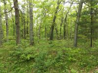 Home for sale: 19.85 Ac Berry Rd., Lake Delton, WI 53940